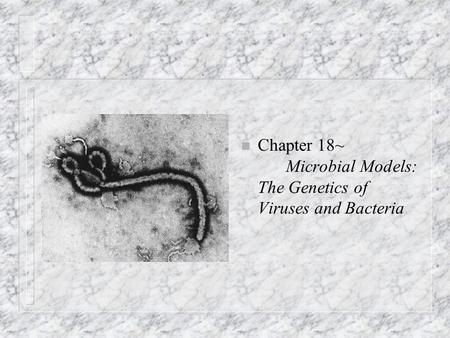 N Chapter 18~ Microbial Models: The Genetics of Viruses and Bacteria.