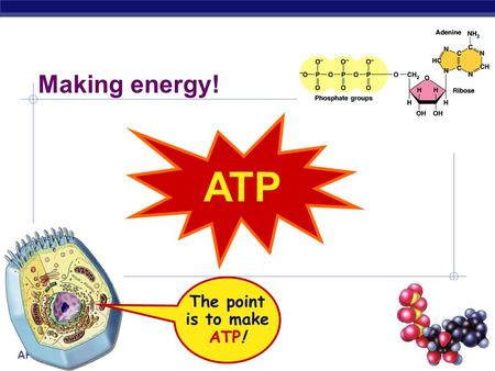 ap biology essay on atp With many ap biology free response, these topics are often intertwined with other   →electrons and energy from nadph and atp created in the light dependent.