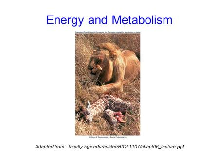 Energy and Metabolism Adapted from: faculty.sgc.edu/asafer/BIOL1107/chapt06_lecture.ppt.