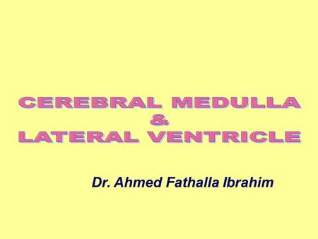 CEREBRAL MEDULLA & LATERAL VENTRICLE
