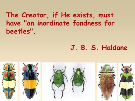 The Creator, if He exists, must have an inordinate fondness for beetles. J. B. S. Haldane.