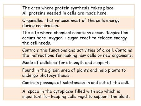 The area where protein synthesis takes place.