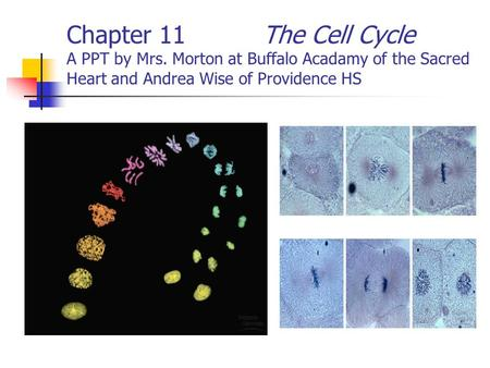Chapter 11The Cell Cycle A PPT by Mrs. Morton at Buffalo Acadamy of the Sacred Heart and Andrea Wise of Providence HS.
