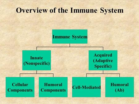 Overview of the Immune System Immune System Innate (Nonspecific) Cellular Components Humoral Components Acquired (Adaptive Specific) Cell-Mediated Humoral.