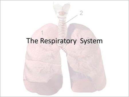 The Respiratory System. The role of the respiratory system The respiratory system helps the body obtain oxygen for respiration and remove the waste product.