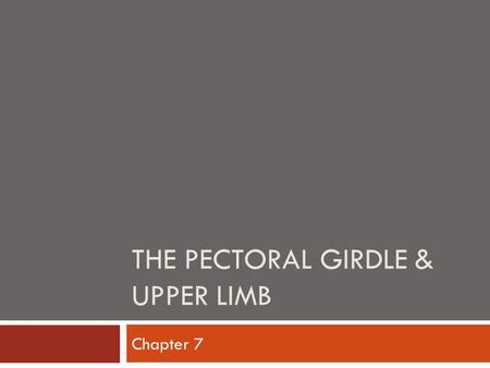 THE PECTORAL GIRDLE & UPPER LIMB Chapter 7. Pectoral Girdle / Shoulder  Very light and has high degree of mobility  Considered an open joint  Consists.