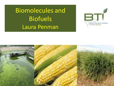 Biomolecules and Biofuels Laura Penman. Q. Why Biofuel?