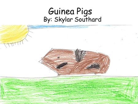Guinea Pigs By: Skylar Southard. Table of Contents Play Time……………………..page 2 Food…………………....……….page 3 Babies……………..…..……….page 4 Guinea Pig Diagram………..page.