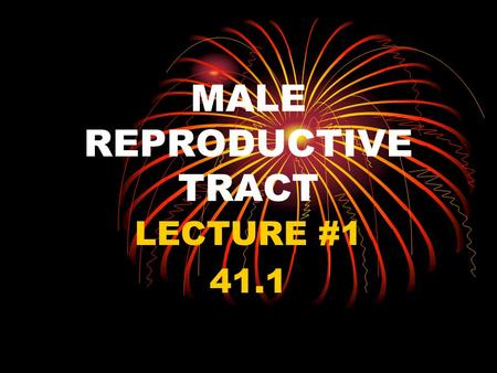 MALE REPRODUCTIVE TRACT LECTURE #1 41.1. I. THE GOAL A. To produce fertile sperm that will unite with the female egg to create a new organism.
