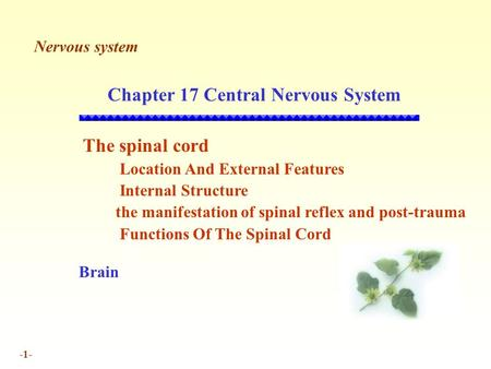 -1- Chapter 17 Central Nervous System The spinal cord Location And External Features Internal Structure the manifestation of spinal reflex and post-trauma.