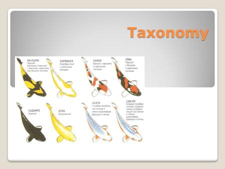 Taxonomy. Taxonomy - study of classifying organisms Taxonomists are scientists who study classifying Taxon ( taxa-plural) is a category into which related.