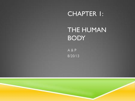 CHAPTER 1: THE HUMAN BODY A & P 8/20/13. ANATOMY  The study of the Structure and Shapes of the body and their relationships to one another. Gross Anatomy: