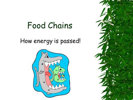 Food Chains How energy is passed! Some animals eat only plants. They eat grass, leaves, tree bark, fruit, nuts, seeds, and parts of flowers. Say the.