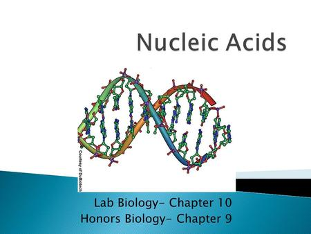 Lab Biology- Chapter 10 Honors Biology- Chapter 9.