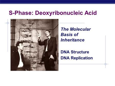 AP Biology S-Phase: Deoxyribonucleic Acid The Molecular Basis of Inheritance DNA Structure DNA Replication.