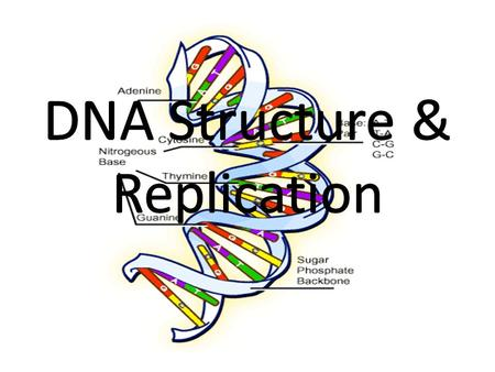 Objectives To explain how instructions in DNA lead to different cells and result in cells being able to perform certain tasks in an organism Identify.