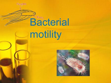 Bacterial motility. Objectives : To gain expertise in determining the motility of living bacteria. To learn about the different methods of motilty determination.
