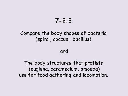 7-2.3 Compare the body shapes of bacteria (spiral, coccus, bacillus) and The body structures that protists (euglena, paramecium, amoeba) use for food gathering.
