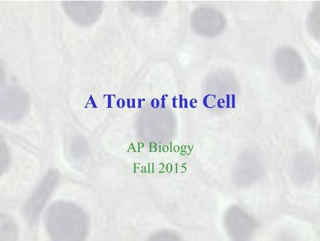 A Tour of the Cell AP Biology Fall 2015. Cells are necessarily small Most cells are between 1 and 100 micrometers They have to be that small to allow.