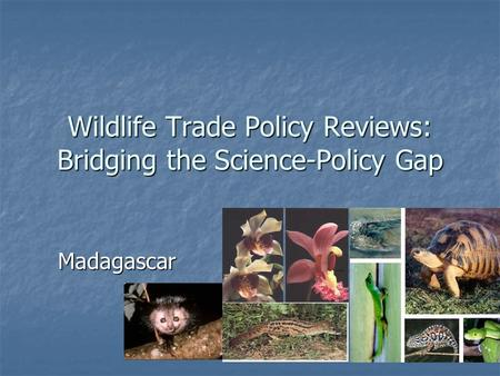 Wildlife Trade Policy Reviews: Bridging the Science-Policy Gap Madagascar.