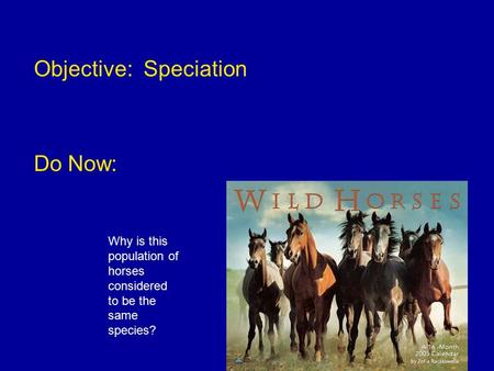 Objective: Speciation Do Now: Why is this population of horses considered to be the same species?