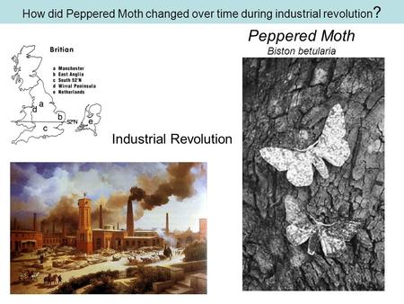 How did Peppered Moth changed over time during industrial revolution?
