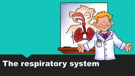 The respiratory system. You breathe in. You breathe out. But what's happening inside? Your lungs are in your chest. You have two lungs, but they aren't.