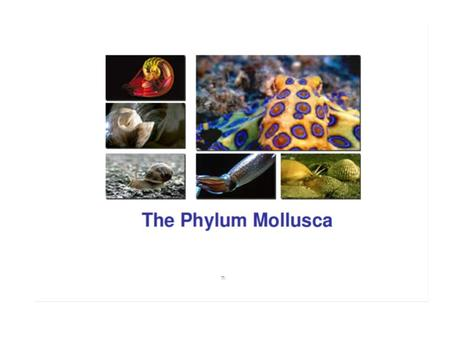 Mollusc Characteristics Unsegmented soft body –Visceral mass Molluscs have a Modified Foot –Muscular foot and/or tentacles Have a mantle (fold in the.