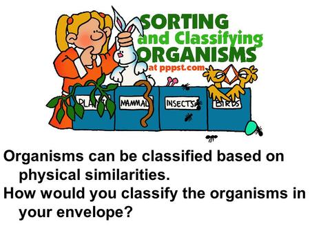 Organisms can be classified based on physical similarities. How would you classify the organisms in your envelope?