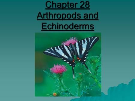 Chapter 28 Arthropods and Echinoderms. Phylum Arthropoda - Arthropods  Largest and most successful phylum  75% of all animals!  Segmented body  Tough.