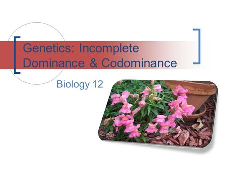Genetics: Incomplete Dominance & Codominance Biology 12.