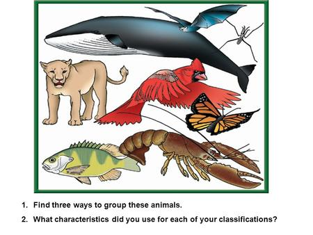 1.Find three ways to group these animals. 2.What characteristics did you use for each of your classifications?