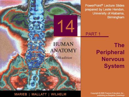PowerPoint ® Lecture Slides prepared by Leslie Hendon, University of Alabama, Birmingham HUMAN ANATOMY fifth edition MARIEB | MALLATT | WILHELM 14 Copyright.
