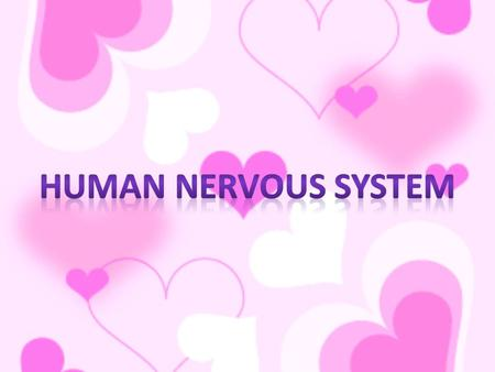 What is the nervous system? Communication and controlling device. Consists of: the brain – the spinal cord – nerves.