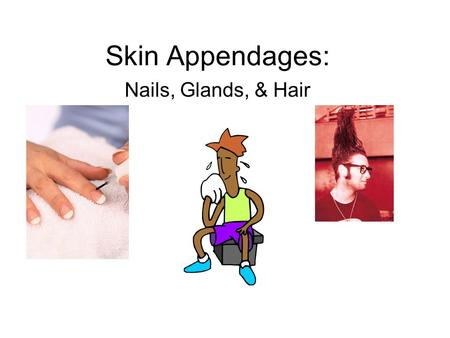 Skin Appendages: Nails, Glands, & Hair.