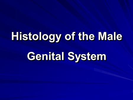 Histology of the Male Genital System. The Male Genital System The male genital system consists of: 1. Primary sex organ: two testes. 2. Accessory sex.