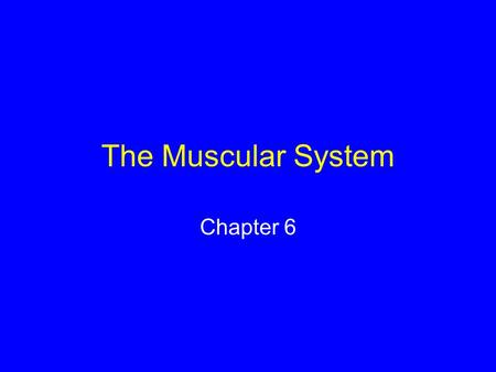 The Muscular System Chapter 6. Skeletal Muscle Bundles of striped muscle cells Attaches to bone Often works in opposition biceps triceps.