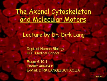 The Axonal Cytoskeleton and Molecular Motors 08/2007 Lecture by Dr. Dirk Lang Dept. of Human Biology UCT Medical School Room 6.10.1 Phone: 406-6419 E-Mail: