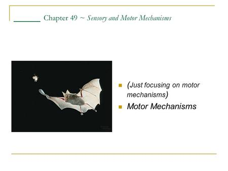 ____ Chapter 49 ~ Sensory and Motor Mechanisms ( Just focusing on motor mechanisms ) Motor Mechanisms.