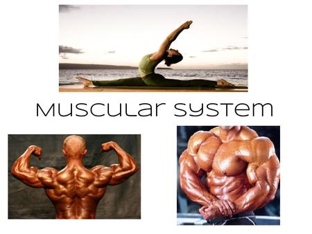"Muscular System. Types of Muscle ● Skeletal – striated & voluntary ● Smooth – involuntary ● Cardiac - heart The word ""striated"" means striped."