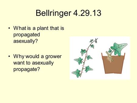 Bellringer 4.29.13 What is a plant that is propagated asexually? Why would a grower want to asexually propagate?