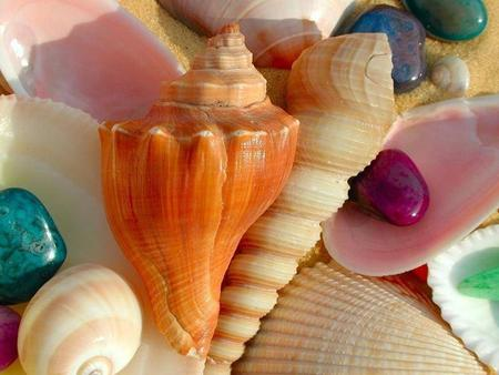 I started collecting shells in 2001. I started collecting shells when I was ten. I have been collecting shells for 5 years. I have been collecting.