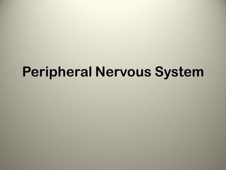 Peripheral Nervous System. Area outside of CNS Consists of: – Nerves – Scattered ganglia.