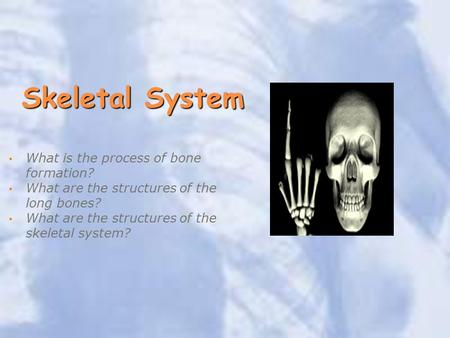 Skeletal System What is the process of bone formation? What are the structures of the long bones? What are the structures of the skeletal system?