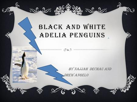 BLACK AND WHITE ADELIA PENGUINS By Najjah Dechau and Drew Angelo.