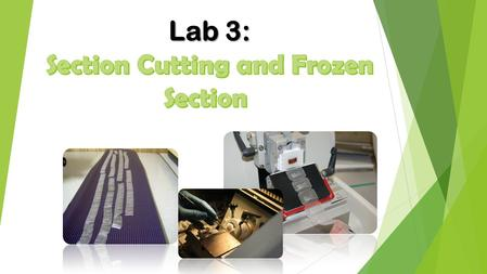 Lab 3: Section Cutting and Frozen Section