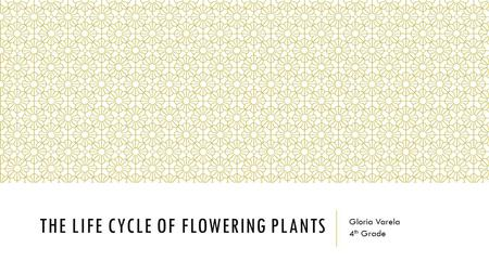 THE LIFE CYCLE OF FLOWERING PLANTS Gloria Varela 4 th Grade.
