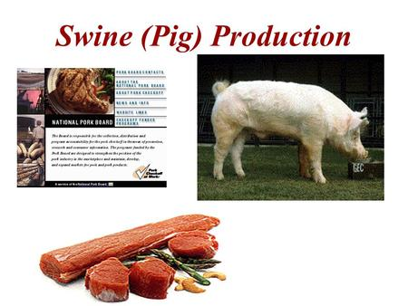 Swine (Pig) Production. Main Purpose – to produce pork for Human consumption.