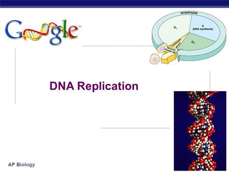 "AP Biology 2007-2008 DNA Replication AP Biology proteinRNA The ""Central Dogma"" DNA transcriptiontranslation replication  Flow of genetic information."