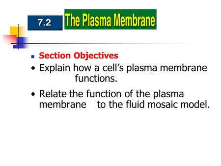 Section Objectives Explain how a cell's plasma membrane functions. Relate the function of the plasma membrane to the fluid mosaic model.